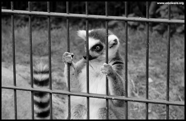 are zoos harmful I think zoos are miserable places for animals for example, one of the reasons why i think zoos are bad for animals is that zoos can't provide sufficient space for the animals animals should be .