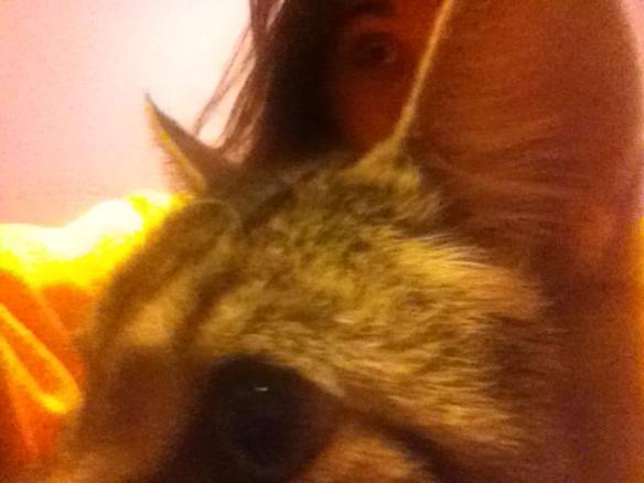 Selfie #39: Kitty eye (Feb. 16)