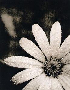 Lith_Flower_Final